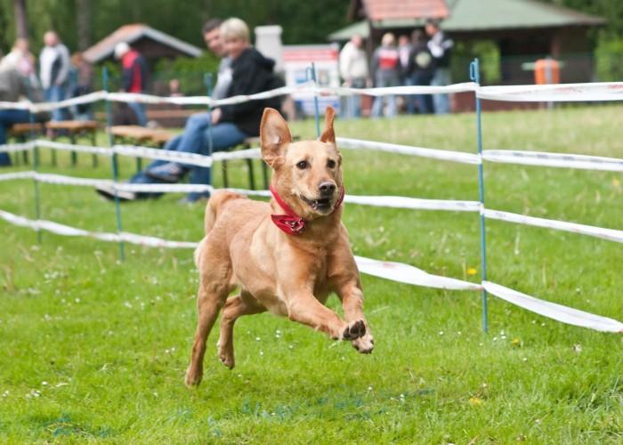 Hundeschule Spiering in Wismar - Hunderennen