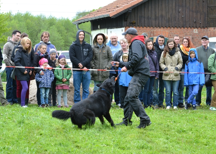 Tierheimfest zum 20. Jubiläum