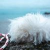 Be-O / Beuteobjekt - Hundeschule Spiering