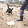Be-O / Beuteobjekt im Einsatz - Hundeschule Spiering