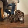 Target - Hundeschule Spiering