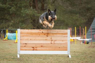 Hundesport - Hundeschule Spiering - Losten / Bad Kleinen