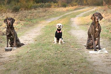 weitere Angebote der Hundeschule Spiering