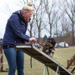 Agility - Hundeschule Spiering - Beschäftigungskurs