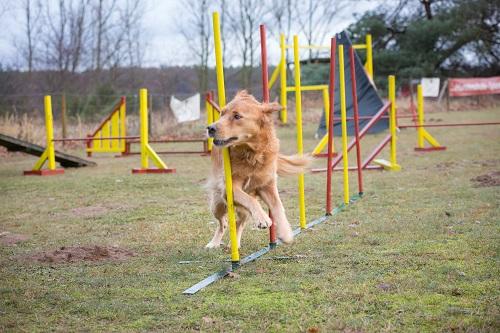 Agility - Hundeschule Spiering - Hundetrainer