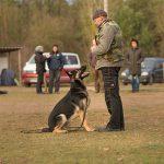 Begleithundekurs - Hundeschule Spiering - Beschäftigungskurse