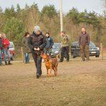 Begleithundekurse - Hundeschule Spiering