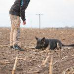 Fährtenkurs / Beschäftigungskurse - Hundeschule Spiering - Neukloster