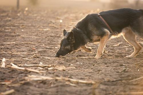Fährtenkurs - Hundeschule Spiering - Nordwestmecklenburg