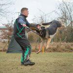 Hundesport - Hundeschule Spiering - Losten / Bad Kleinen / Wohlenberg
