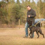 Partnerzirkel - Hundetraining - Hundeschule Spiering