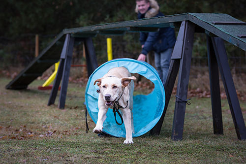 Partnerzirkel - Mensch und Hund im Vordergrund - Hundeschule Spiering