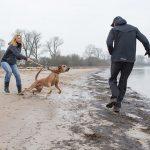 Problem- und Verhaltensanalyse - Hundeschule Spiering (Bad Kleinen)
