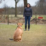 Sachkunde / Beratung - Hundeschule Spiering