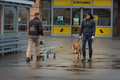 Sachkunde - Hundetrainer Lars Spiering