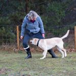 Trick Dog - Hundeschule Spiering