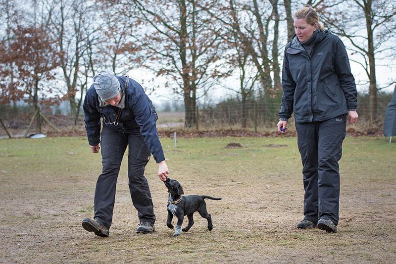 Welpentraining - Hundeschule Spiering