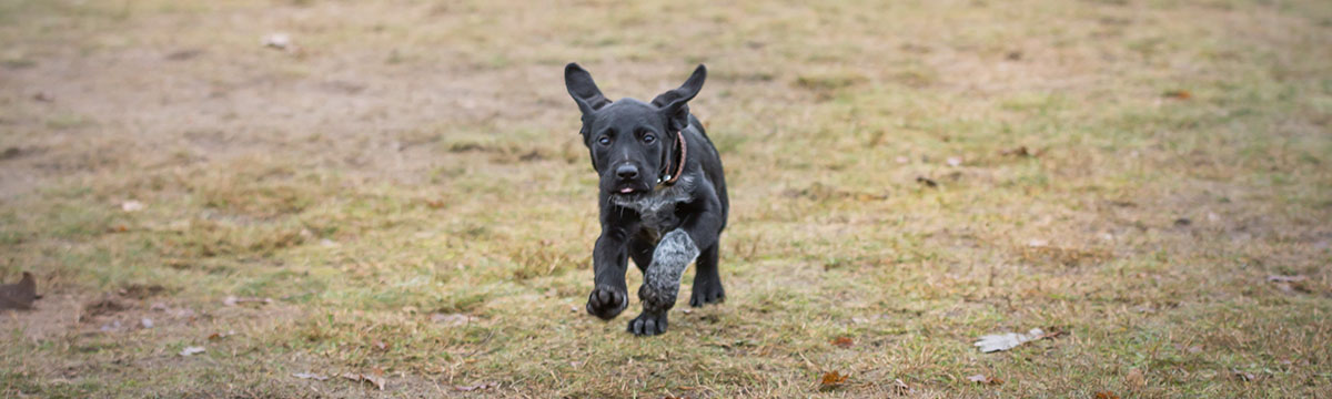 Welpentraining / Hundetraining - Hundeschule Spiering