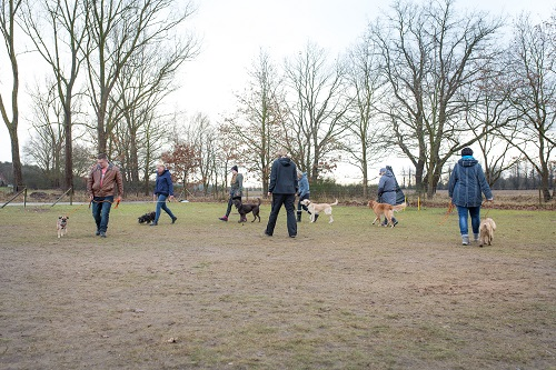 Basiskurs der Hundeschule Spiering - Wismar / Schwerin