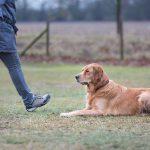 Basiskurs - Platz, Sitz, an der Leine gehen - Hundeschule Spiering