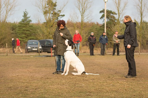 Begleithundekurs / Begleithundetraining - Hundeschule Spiering