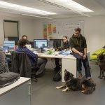 Bürobegleithund / Hundeausbildung - Hundeschule Spiering