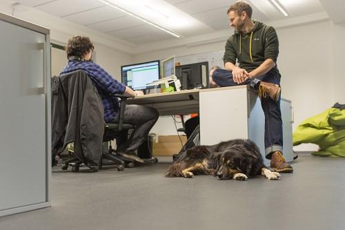 Bürobegleithund - Hundeschule