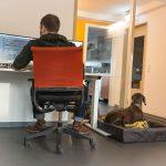 Bürobegleithund / Hundetraining - Hundeschule Spiering