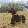 Steuermarke am Hund - Hundeschule Spiering