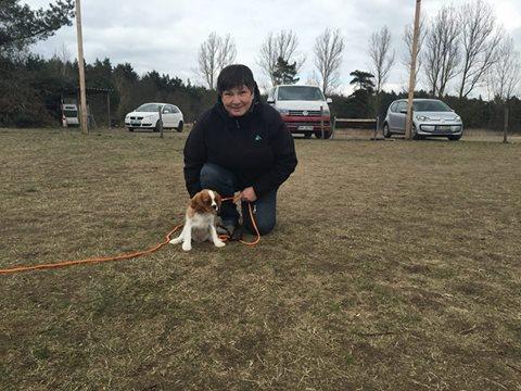 Hund Lotte aus Bonn bei der Hundeschule Spiering