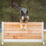 Hundesport / Training - Hundeschule Spiering - Schwerin / Wismar