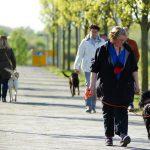 Praxiskurs im Bürgerpark Wismar