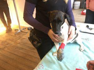 Relaxed Dog - alltägliche Situationen erlernen - Hundeschule Spiering