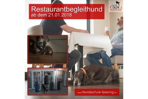 Restaurantbegleithund