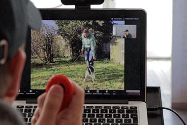 Onlinecoaching - Hundeschule Spiering