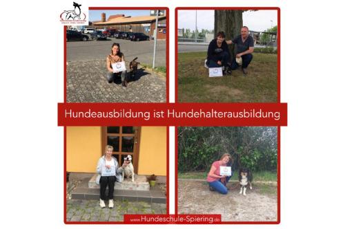 Hundeausbildung ist Hundehalterausbildung