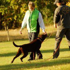 Ferienhundeschule mit Bruno
